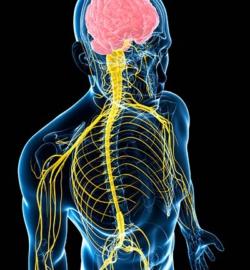 zabolevaniya-tsentralnoi-i-perifericheskoi-nervnoi-sistemy